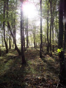 HHW Sun through trees